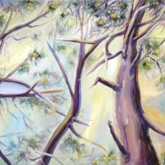 Sublime Pines Landscape Art - Torrey Pines, CA