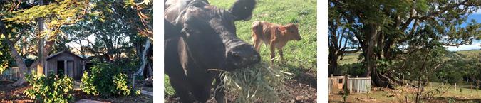 Tooraloo Farm