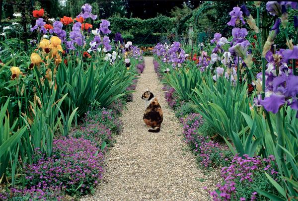 Floral Garden Paths