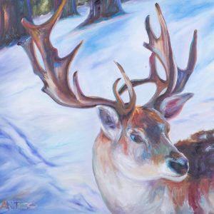 Tetrachromat Reindeer