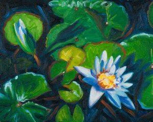Waterlily of Wonder