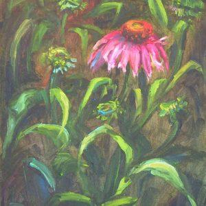 Echinacea Noir